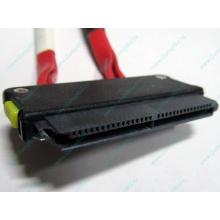 SATA-кабель для корзины HDD HP 451782-001 459190-001 для HP ML310 G5 (Нефтеюганск)